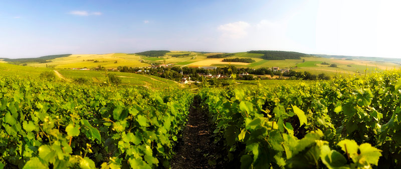 Drappier, Champagne, France, Burgundy, Germany, Russia, Michel Drappier