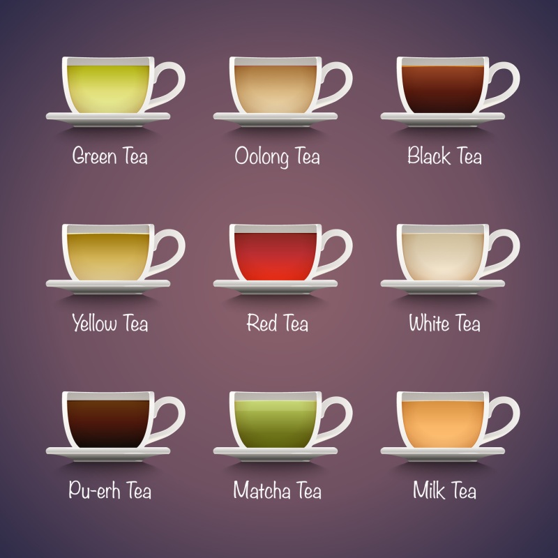 Tea Types Infographics Vector Tea Drinks Guide Chef At Large