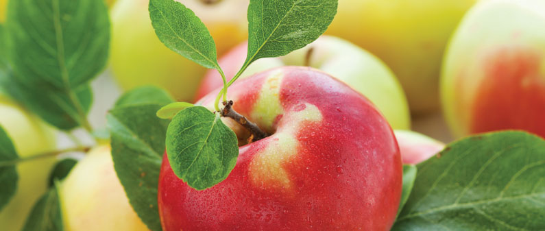 Apples, Fibre, US Apples, Health, Nutrition